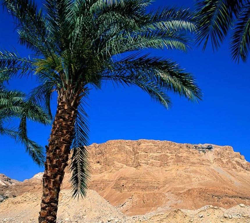 успехи в лечении псориаза в израиле, мертвое море, пальма, гора, пустыня