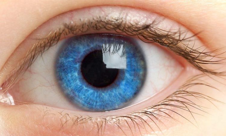Глазная сетчатка может рассказать о ранних стадиях болезни Альцгеймера
